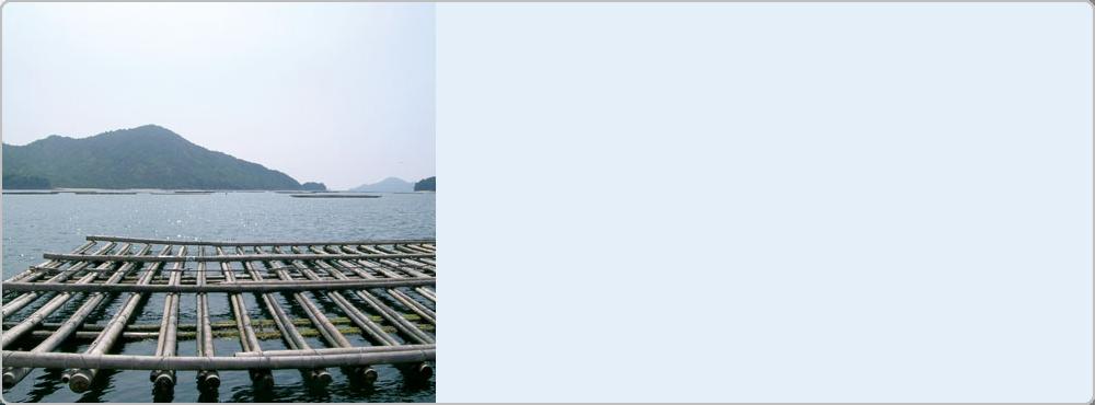 広島産 宮島牡蠣